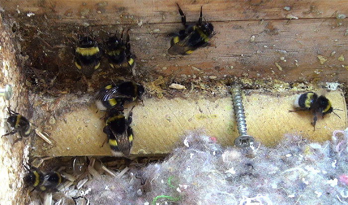 angefangenes nest im brutkasten